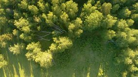 Vertical aerial view of green field and forest at sunset