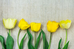 Vertical arrangement of light yellow tulips on linen fabric background, minimalist style, mother`s day, birthday Royalty Free Stock Image