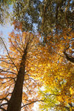 Vertical Autumn colors. Royalty Free Stock Photos