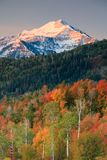 Vertical Autumn sunrise in the Southern Wasatch Mountains. Autumn aspen sunrise in the Southern Wasatch Mountains, Utah, USA Stock Photos