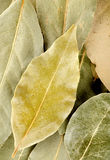 Vertical background with bay leaf Stock Images