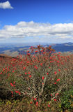 Vertical Background Mountain Ash Blue Ridge North Carolina Stock Photos