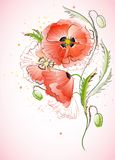Vertical Background with Red Poppy Stock Photos