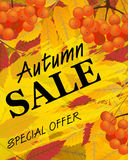 Vertical background with rowan, berries and leaves, fall. Sign a. Utumn sale. Vector illustration Stock Photography