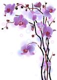 Vertical background with violet orchids Royalty Free Stock Image