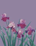 Vertical Background With Iris Stock Photos