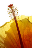 Vertical backlit flower Royalty Free Stock Images