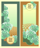 Vertical Banner. Cabbage and cabbage fields. Farm before and after harvesting. Stock Photo