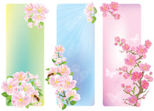 Vertical banners with a blossoming branch Royalty Free Stock Photos
