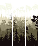 Vertical banners of coniferous wood. Set vector vertical banners of coniferous treetops forest (pine, spruce, cedar Royalty Free Stock Photo