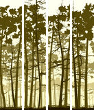 Vertical banners of coniferous wood. Stock Image