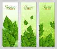 Vertical banners with green leaves. And water drops. Morning dew, fresh spring foliage. Vector illustration. Spring is coming concept Royalty Free Stock Photo