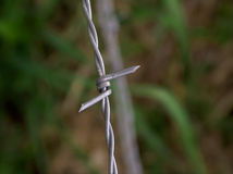 Vertical Barbed Wire. Close up of a barbed wire fence with a blurry background Stock Photo