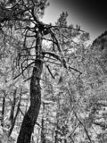 Vertical black and white dramatic tree background stock photo
