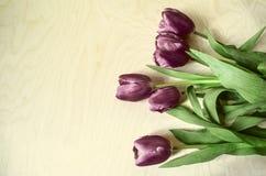 Vertical border of dark purples tulips Stock Images