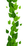 Vertical border with green leaves Royalty Free Stock Image