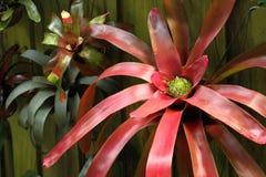 Vertical Bromeliad Garden Stock Images