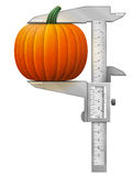 Vertical caliper measures pumpkin fruit Royalty Free Stock Photography
