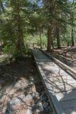 Vertical, caminho de madeira de Fawn Lakes em New mexico imagem de stock royalty free