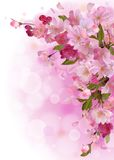 Vertical card with gentle pink sakura flowers Royalty Free Stock Photography