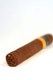 Vertical Cigar. Cigar on a white background Royalty Free Stock Images