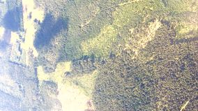 Vertical clip aerial view over forest summer landscape stock footage