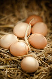 Vertical close-up of fresh brown eggs on straw Stock Photography
