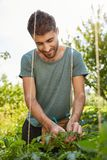 Vertical close up outdoors portrait of cheerful good-looking caucasian male gardener working in garden, tying up. Vegetables, watching over plants Royalty Free Stock Image