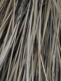 Vertical close up of a Yucca plant in southern Arizona. stock photos