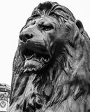 Vertical closeup of a Trafalgar Square lion Royalty Free Stock Photo