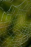 Vertical Cobweb Royalty Free Stock Images