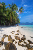 Vertical coconut trees on white sand beach Royalty Free Stock Images