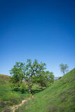 Vertical Composition Oak Tree Royalty Free Stock Photography