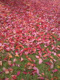 Vertical composition with red fallen leaves on grass Royalty Free Stock Photography