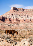 Vertical Composition Scenic Desert Southwest Landscape Animal Royalty Free Stock Photo