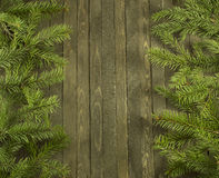 Vertical conifer background Stock Photography
