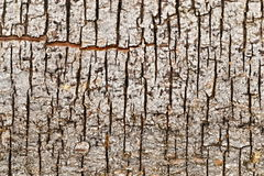 Vertical cracks in bark of tree Stock Images