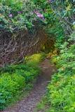 Vertical Craggy Gardens NC Hiking Trail Stock Photos