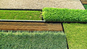 Vertical Crops Royalty Free Stock Photography