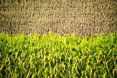 Vertical cultivation Stock Image