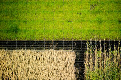 Vertical cultivation Stock Photography