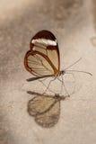 Vertical de cristal del ala en marmer Imagen de archivo