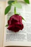 Vertical de la rosa del rojo del soneto 18 Imágenes de archivo libres de regalías