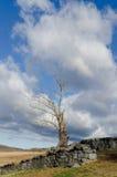 Vertical del árbol muerto y de la pared de piedra Imagen de archivo libre de regalías