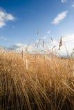 Vertical del campo de la cosecha Fotografía de archivo