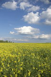 Vertical del prado del verano Imágenes de archivo libres de regalías