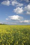 Vertical do prado do verão Imagens de Stock Royalty Free