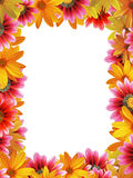 Vertical flower frame. With space for copy Stock Image