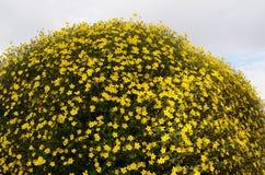 Vertical flowerbed against sky in Helsinki Stock Photography