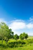 Vertical forest landscape royalty free stock images